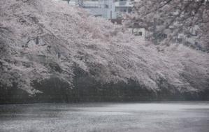 157-20100407meguro.JPG