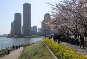 218-20120405sumida.JPG