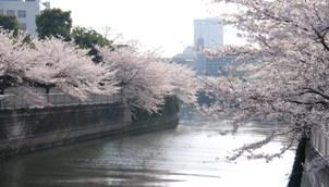 76-20080403meguro.JPG