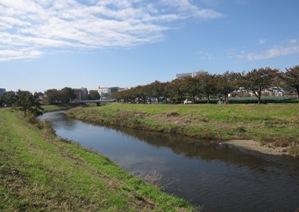 209-20111112kurome.JPG
